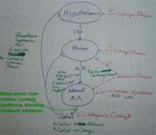 About Adrenal Gland Diseases