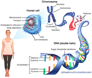 5 Most Common Genetics Diseases