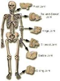 Five Types Of Bone Diseases