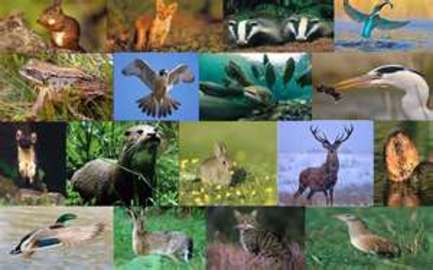 Information About Wildlife Management