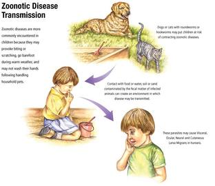 the Most Common Zoonotic Disease
