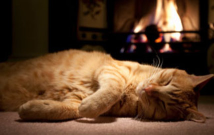 What Are The Causes Of Cats Diseases