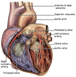 What Are The Causes Of Cardiac Diseases