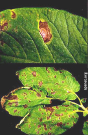 How Apsnet Helps Promote the Study And Management Of Plant Diseases