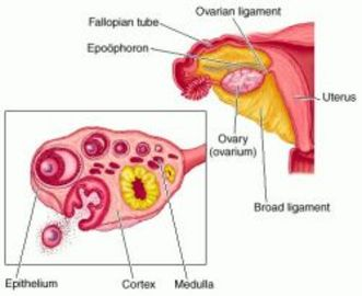How To Treat Ovarian Diseases