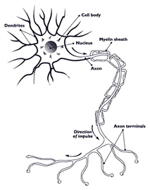 Foods That Cause Diseases In Nerve
