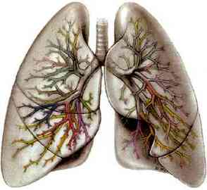 Information About Diseases Of The Lung