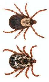 Tick Diseases: A Hidden Danger To Your Dogs