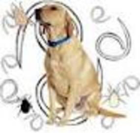 5 Types Of Canine Endoparasite