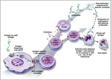 How To Treat Immunological Diseases