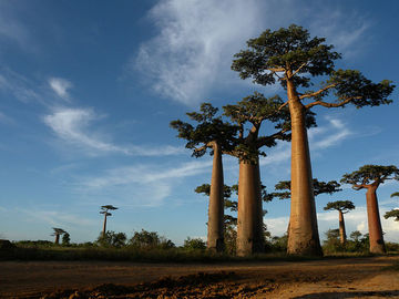 Madagascar : Most Popular Places To Enjoy A Vacations With Children