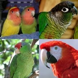 Pet Bird Faqs