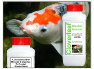 How To Treat Koi Carp Diseases