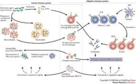 What Is Autoimmune Diseases