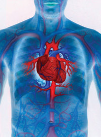 Common Diseases Of the Cardiovascular System
