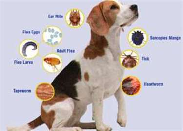 the Most Common Diseases in Dogs