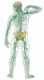 What Makes the Nervous System Nervous?