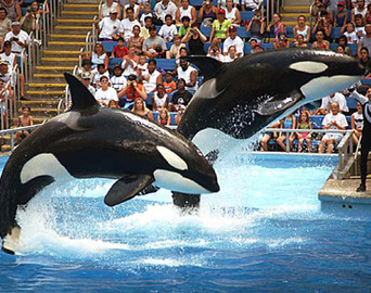 Adventure On Sea World Vacations