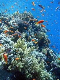Snorkeling Vacations On Egypt's Red Sea Coast