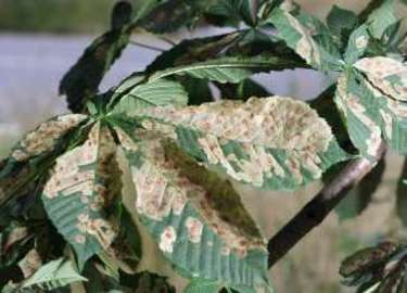 About What Causes Leaves To Shrivel