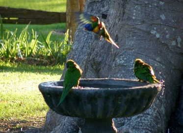 How To Build a Bird Bath