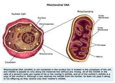 How To Deal With Mitochondrial Diseases