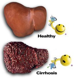 How To Prevent Diseases Of The Liver