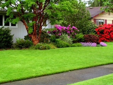 Making Your Lawn Bird Proof