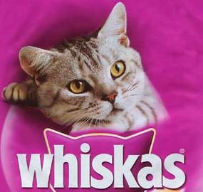 What Are the Top 5 Brands Of Wellness Food Cat