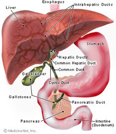 Information About Liver Diseases