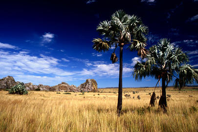 Sites To See In Madagascar