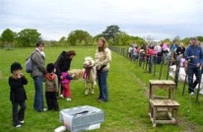 Great Places For Pony Rides Birthday Parties