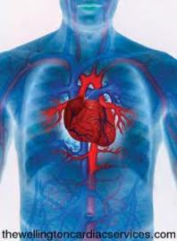 Most Common Cardiovascular System Diseases