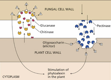 About Plant Phytoalexins