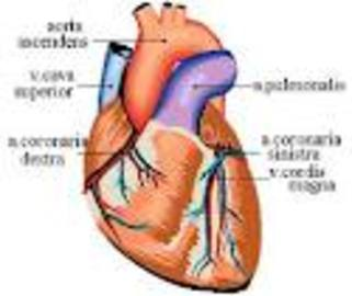 The Heart Diseases-cholesterol Link