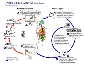 What Is Zoonoses?