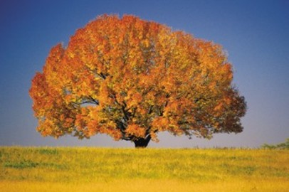 What Are The Causes Of Aspen Tree Diseases